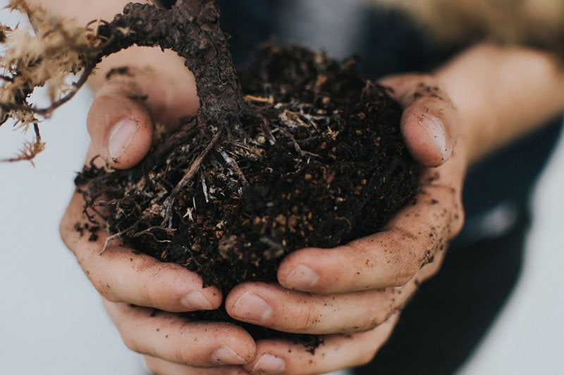 autumn composting tips3